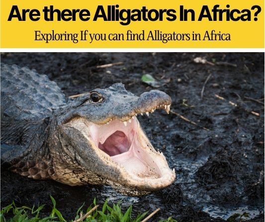 Are there alligators in africa