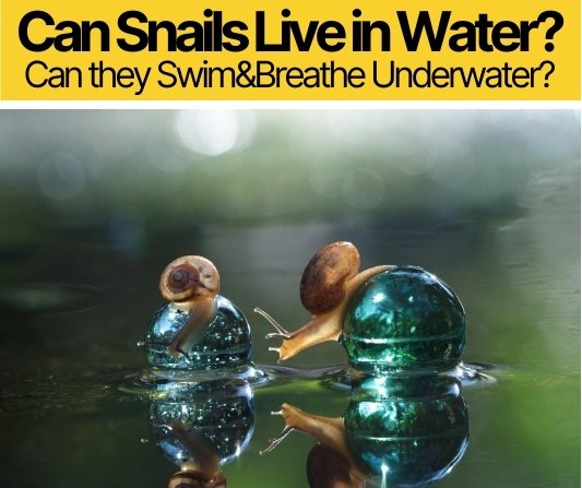 Can Snails Live in Water