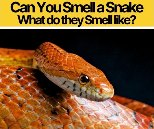 Can You Smell a Snake