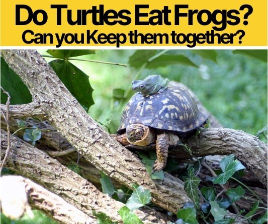Do Turtles Eat Frogs - Which Turtles Can eat Frogs?