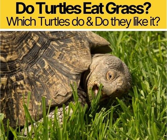 Do Turtles Eat Grass - Do Turtles Like Grass?