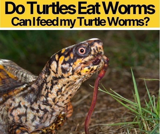 Do Turtles Eat Worms- Can I feed my Turtle Worms?