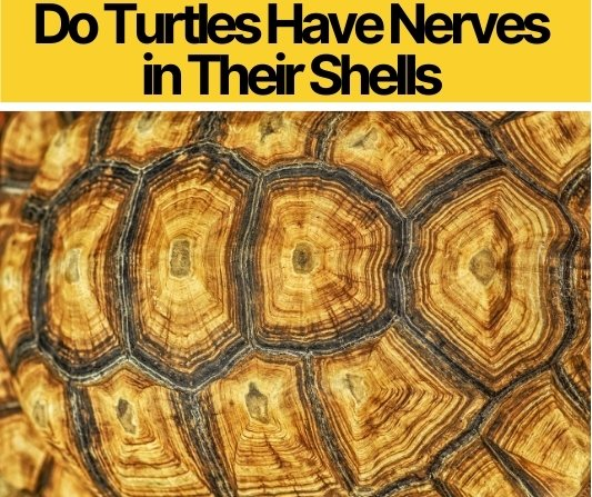 Do Turtles Have Nerves in Their Shells -Do they Feel Touches?