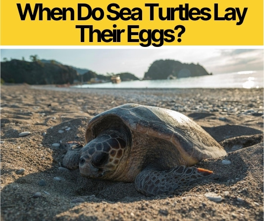 When Do Sea Turtles Lay Their Eggs? What Month&Time of Day